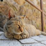 尾道は猫の街