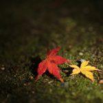 佛通寺の紅葉を撮る!