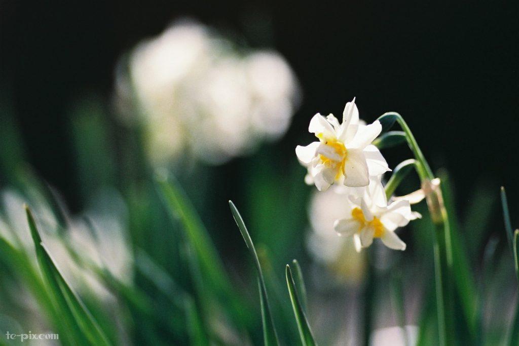 EOS-1Nの作例(花)